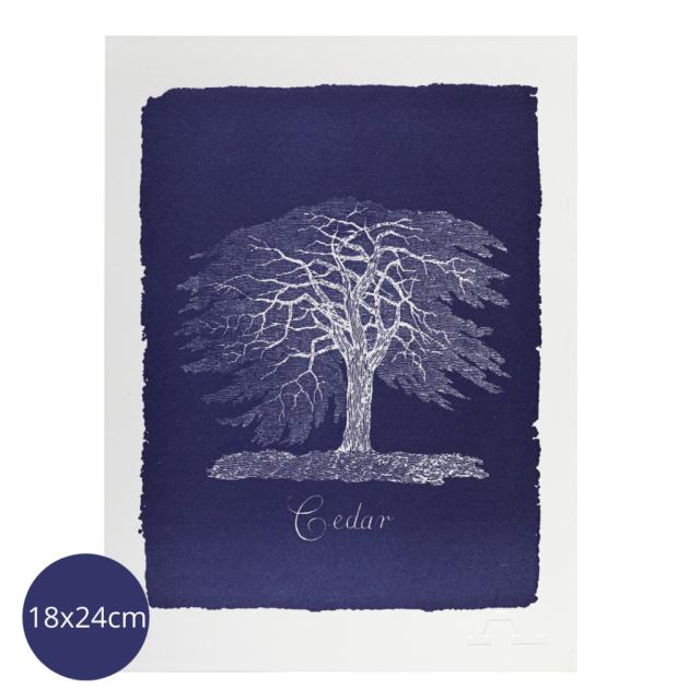 Cedar Tree - Mini Prints - Natural History Museum - from Archivist Gallery