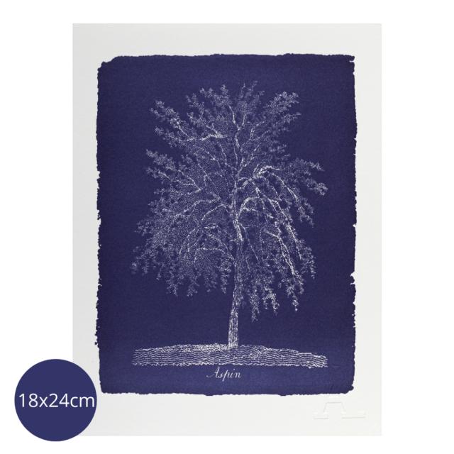 Aspin Tree