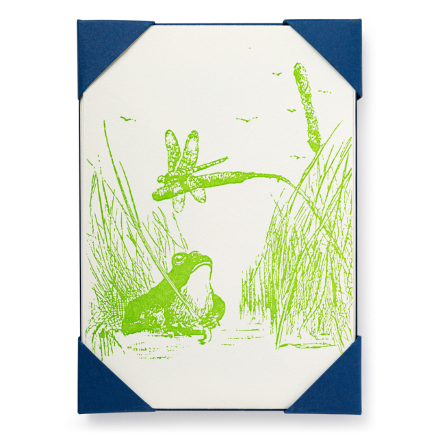 Frog - Notelets Packs - from Archivist Gallery