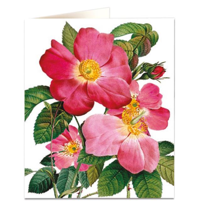 Single Provins Rose