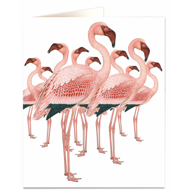 Flamingos - Letterpress Cards - Natural History Museum - from Archivist Gallery