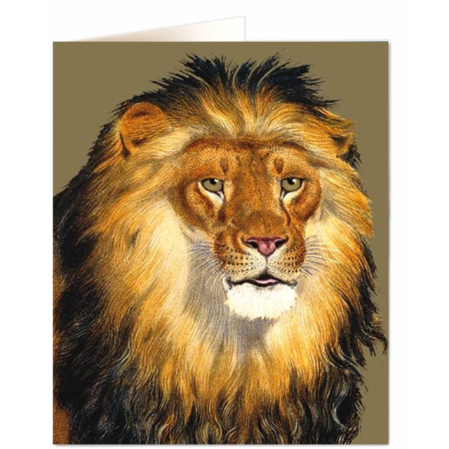 Lion - Letterpress Cards - Natural History Museum - from Archivist Gallery