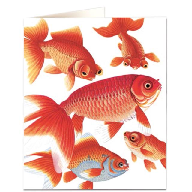 Goldfish Natural History Museum