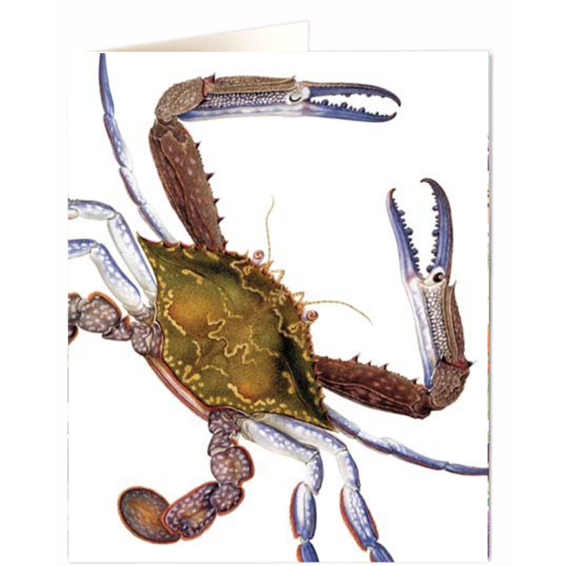 Crab - Letterpress Cards - Natural History Museum - from Archivist Gallery