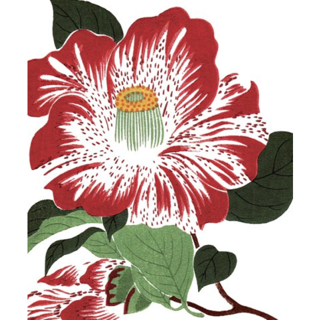 Kokinran camelia - Letterpress Cards - Natural History Museum - from Archivist Gallery