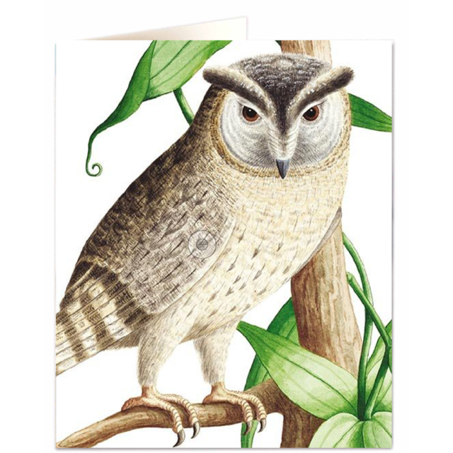 Collared scoops owl