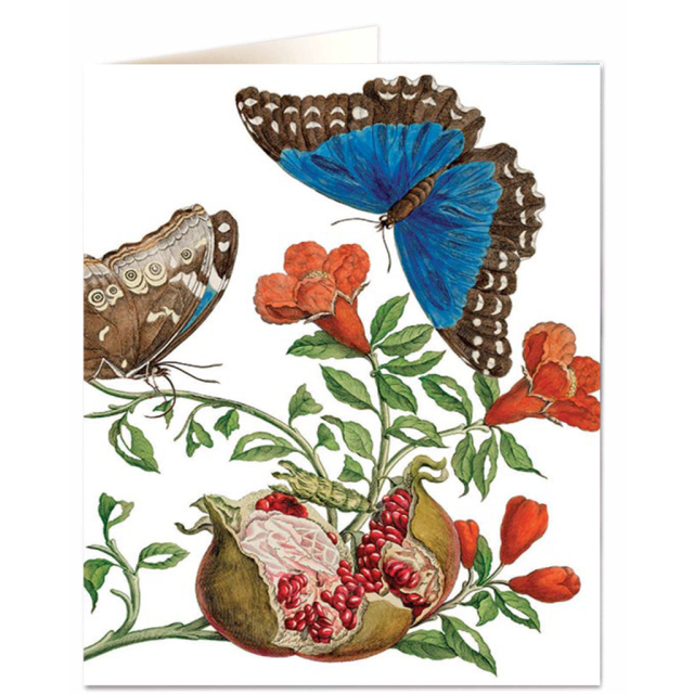 Insects of Surinam - Letterpress Cards - Natural History Museum - from Archivist Gallery