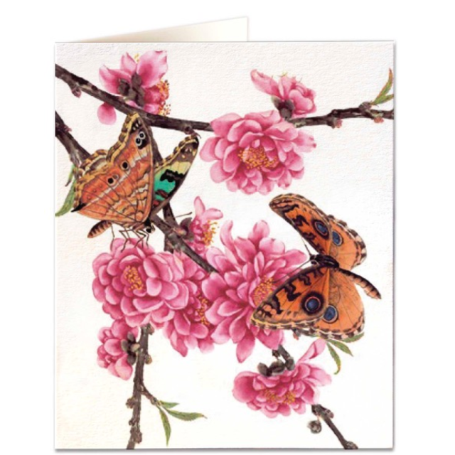Blossom and butterflies