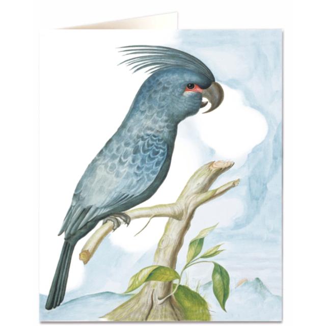 Asian parrot