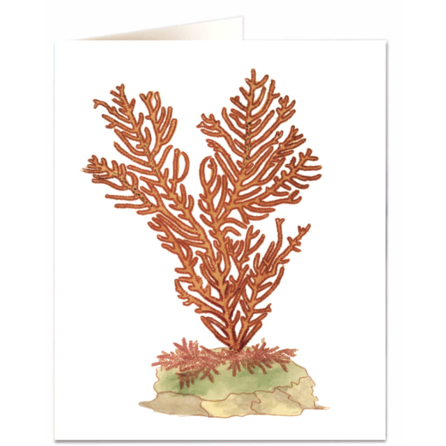 Phenilia coral - Letterpress Cards - Natural History Museum - from Archivist Gallery