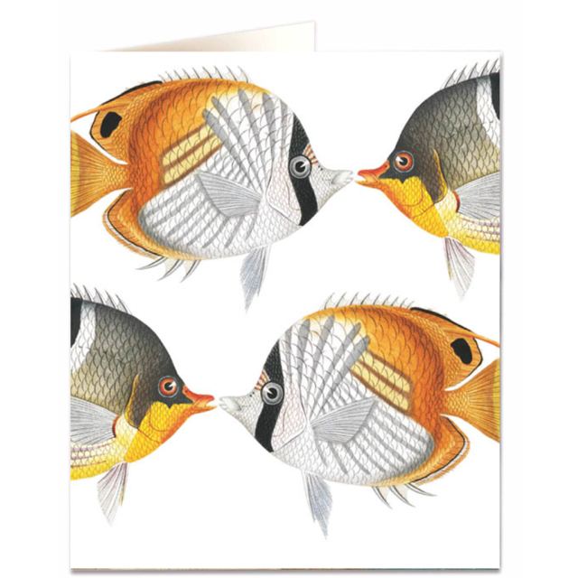 Chaetodon Fish