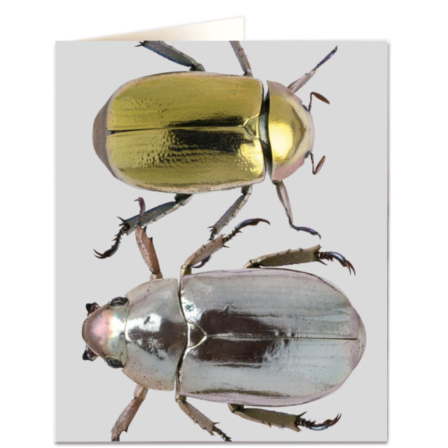 Metalic Beetles - Letterpress Cards - Natural History Museum - from Archivist Gallery