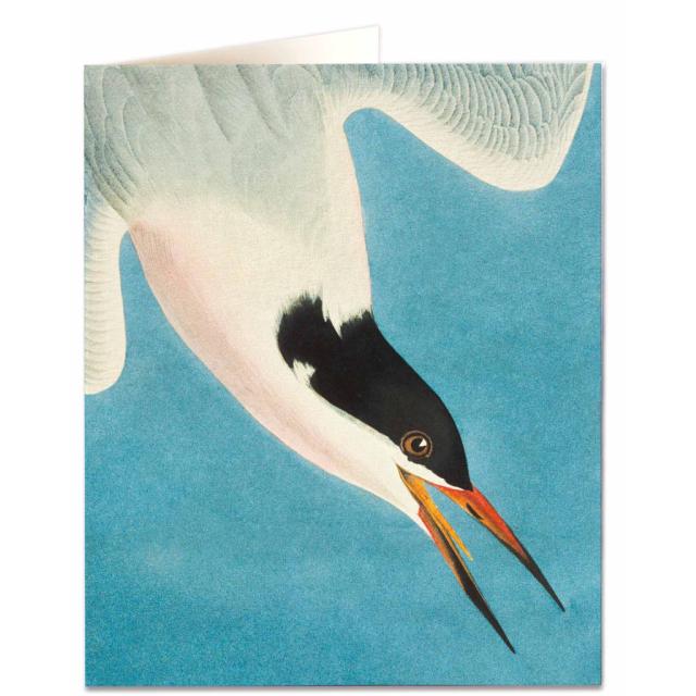 Roseata Tern